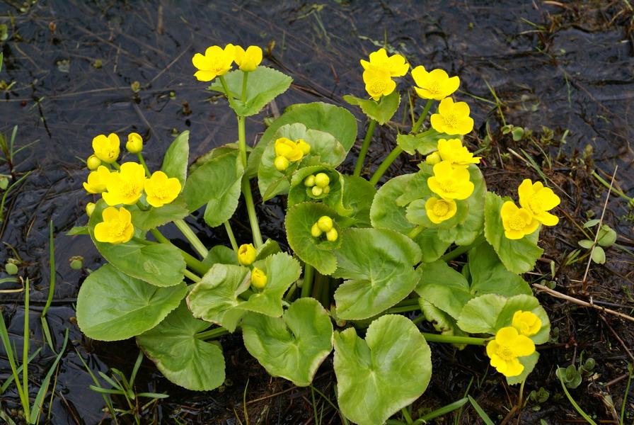 Visite guid e du jardin - Noms de plantes aquatiques ...